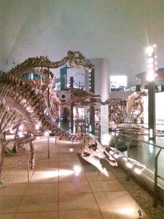 化石いっぱい