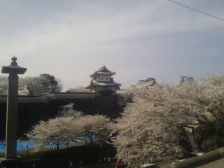 金沢城でお花見中